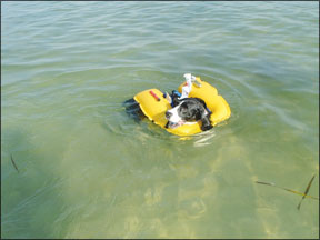 Critter?s Inflatable Pet PFD