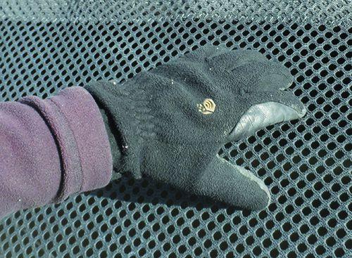 Winter Glove Report